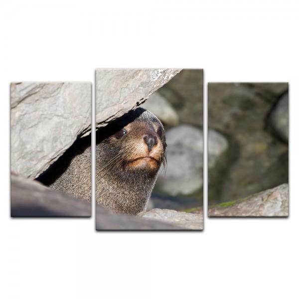 Leinwandbild - Robbe - Neuseeland