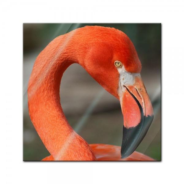 Glasbild - Flamingo