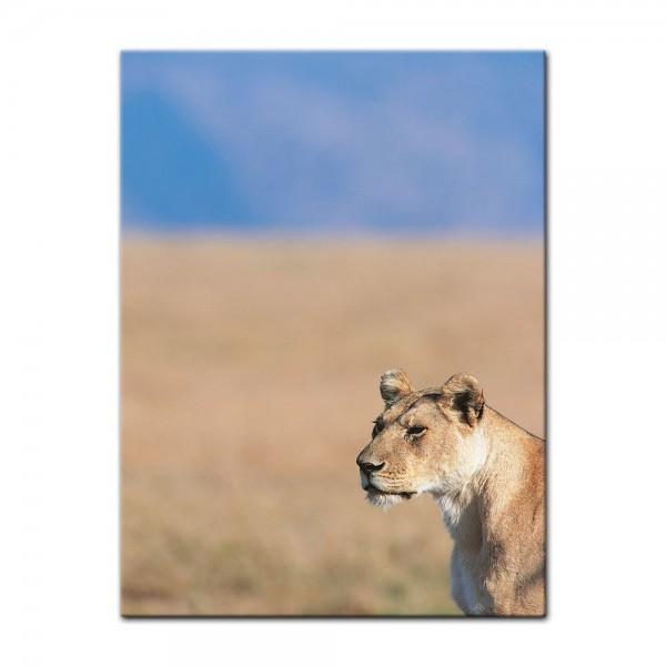 Leinwandbild - Löwin