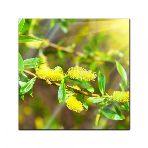 Glasbild - Blühende Weide