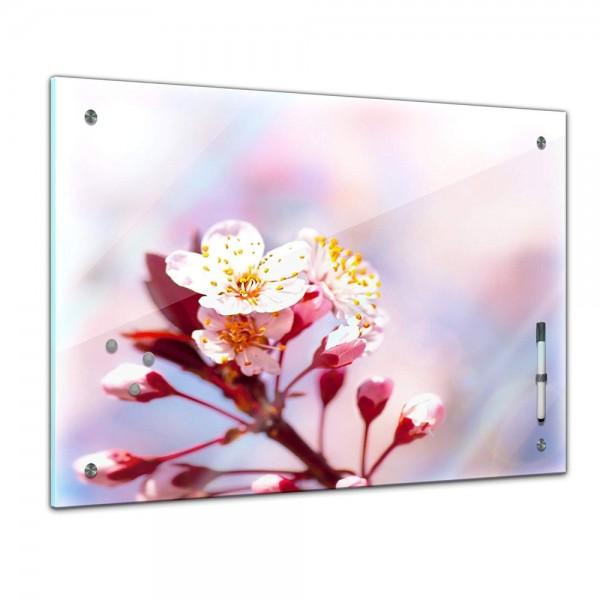 Memoboard - Pflanzen & Blumen - Apfelblüten