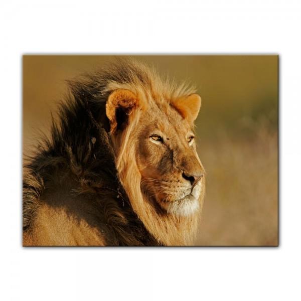 Leinwandbild - Afrikanischer Löwe