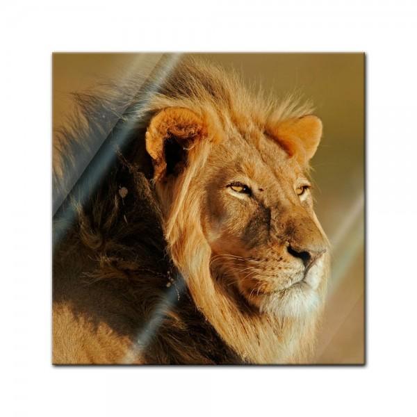 Glasbild - Afrikanischer Löwe