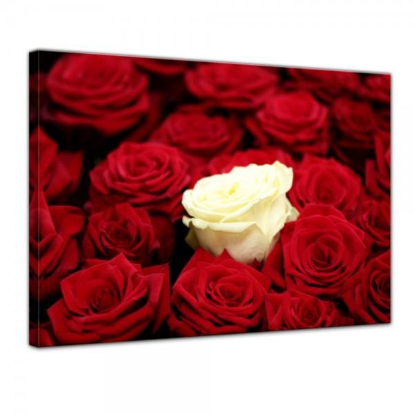 SALE Leinwandbild - weiße Rose - 50x40 cm