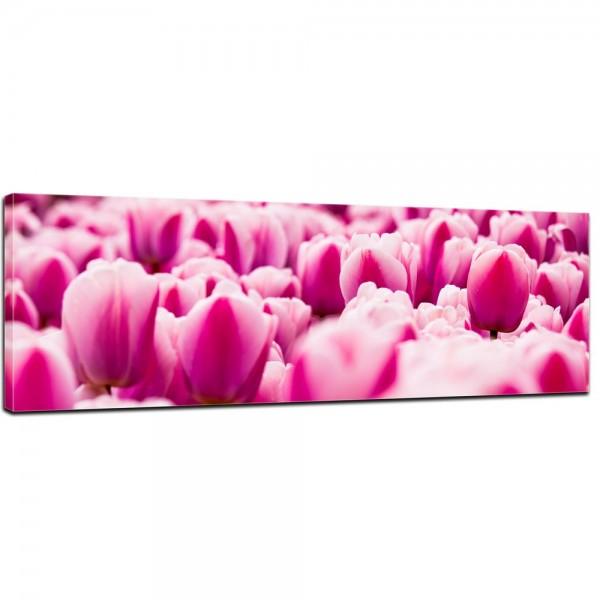 SALE Leinwandbild - Pinke Tulpen - 160x50 cm