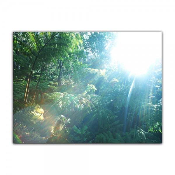 Leinwandbild - Regenwald in Hawaii