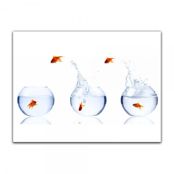 Leinwandbild - Fischolympiade