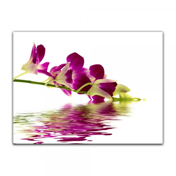 Leinwandbild - Orchidee IV