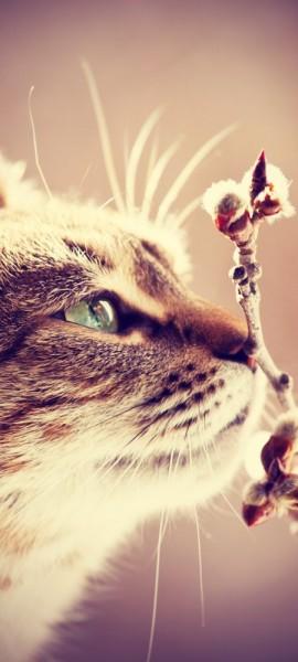 Türtapete selbstklebend Katze Vintage 90 x 200 cm Tier Haustier Zucht Rasse Stubentiger cat Hauska
