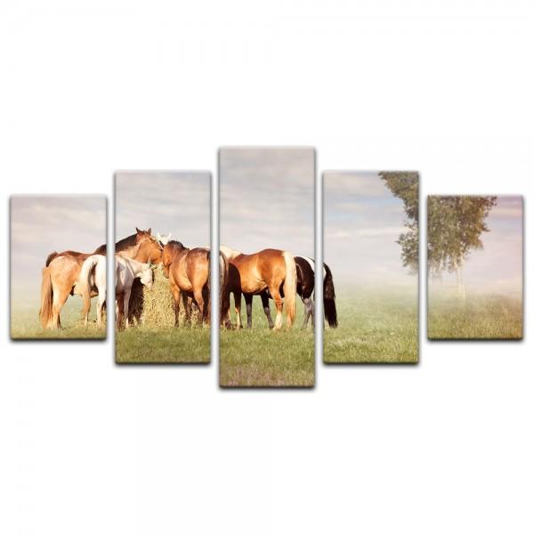 Leinwandbild - Pferde III