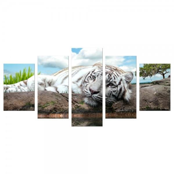 Leinwandbild - White Tiger