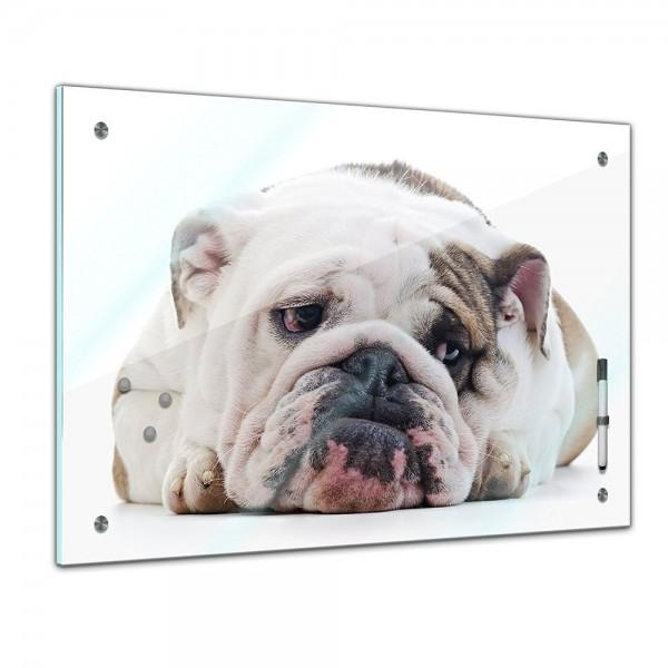 Memoboard - Tiere - Entspannte Bulldogge