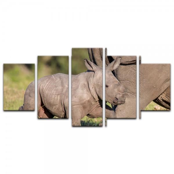 Leinwandbild - Nashornbaby