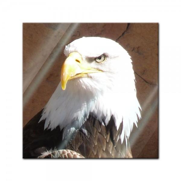Glasbild - Adler