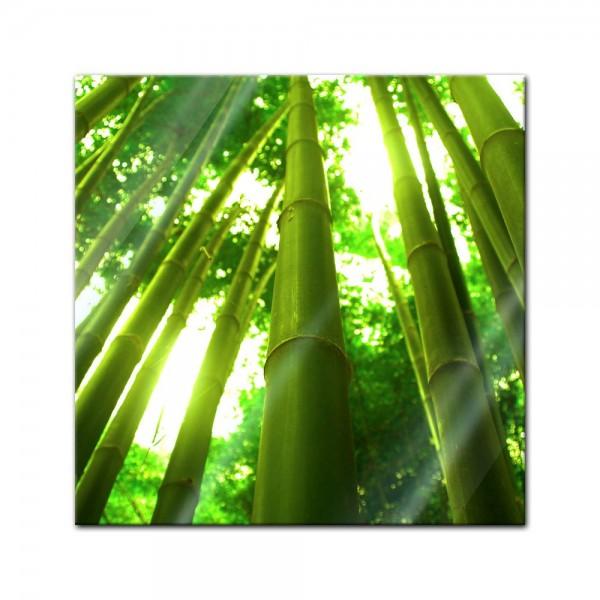 Glasbild - Bambus in Thailand