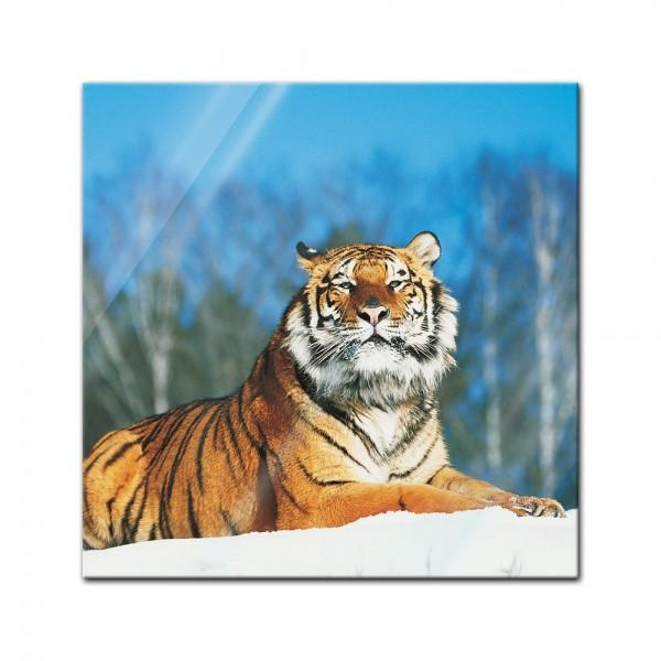 Glasbild - Tiger im Schnee