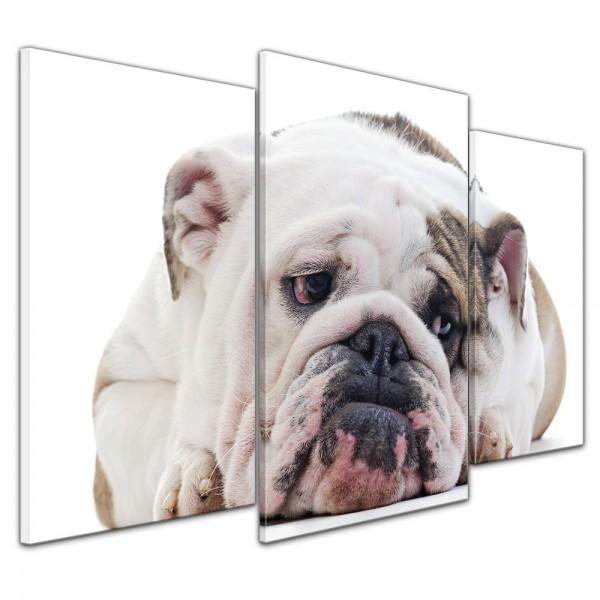 SALE Leinwandbild - Englisch Bulldogge - 100x60 cm 3tlg