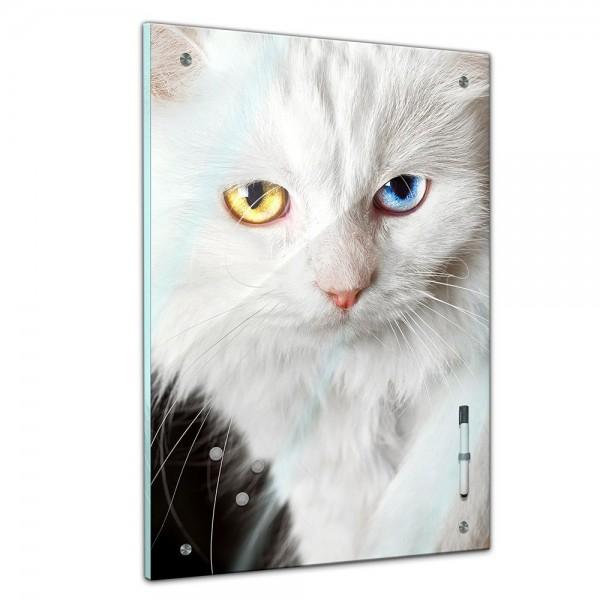 Memoboard - Tiere - Weiße Katzen mit bunten Augen
