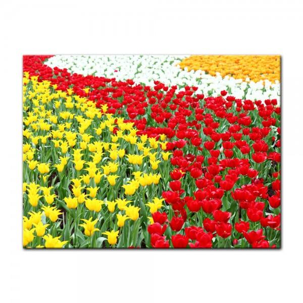 Leinwandbild - Farbenfrohes Tulpenfeld