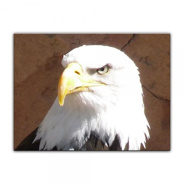 Leinwandbild - Adler