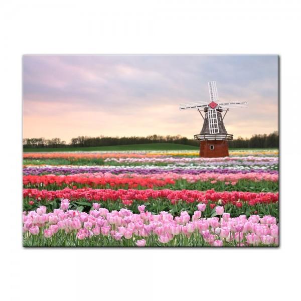 Leinwandbild - Tulpenfeld mit Windmühle