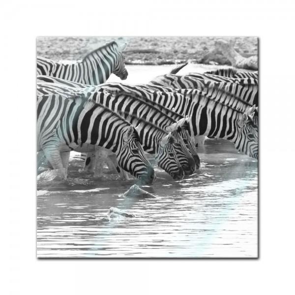Glasbild - Zebras an einer Wasserquelle