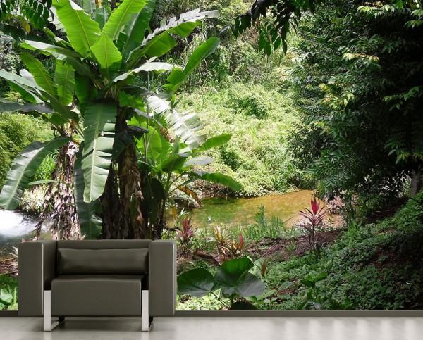 Fototapete - Bananenbaum im Dschungel