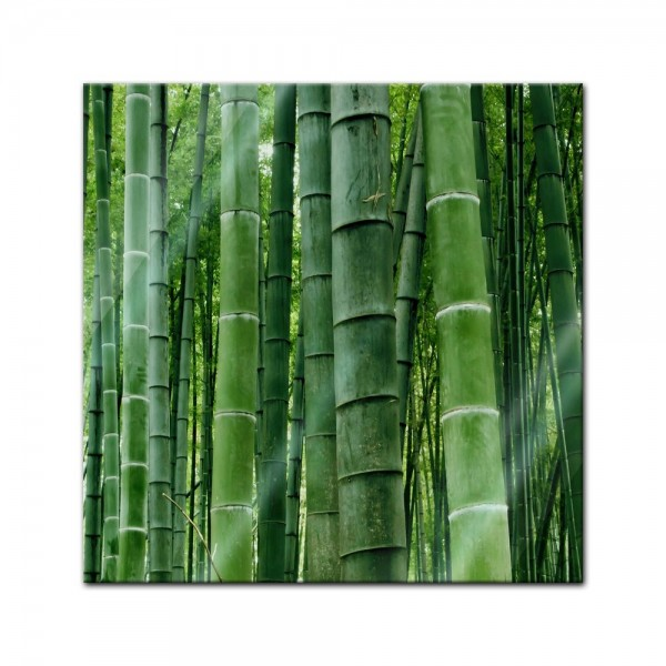 Glasbild - Bambuswald in Sichuan China