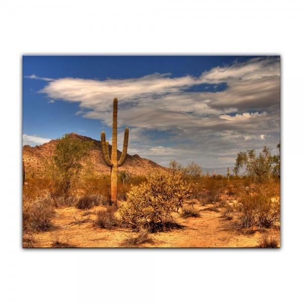 Leinwandbild - Wüste Kaktus