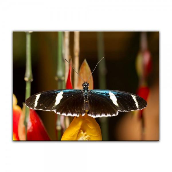 Leinwandbild - Schmetterling II