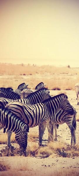 Türtapete selbstklebend Zebras im Sonnenuntergang Vintage 90 x 200 cm Tier gestreift schwarz weiss