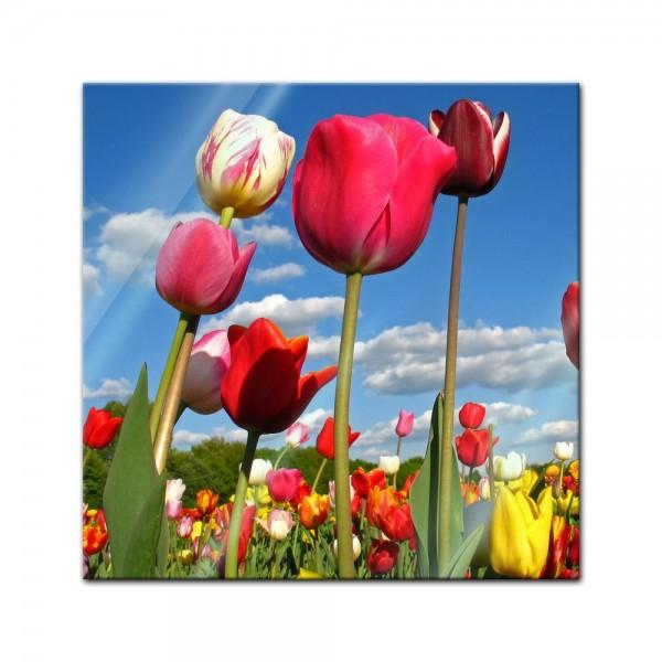 Glasbild - Tulpenbeet
