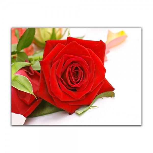 Leinwandbild - Rose