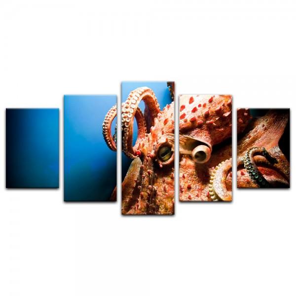 Leinwandbild - gigantischer Octopus