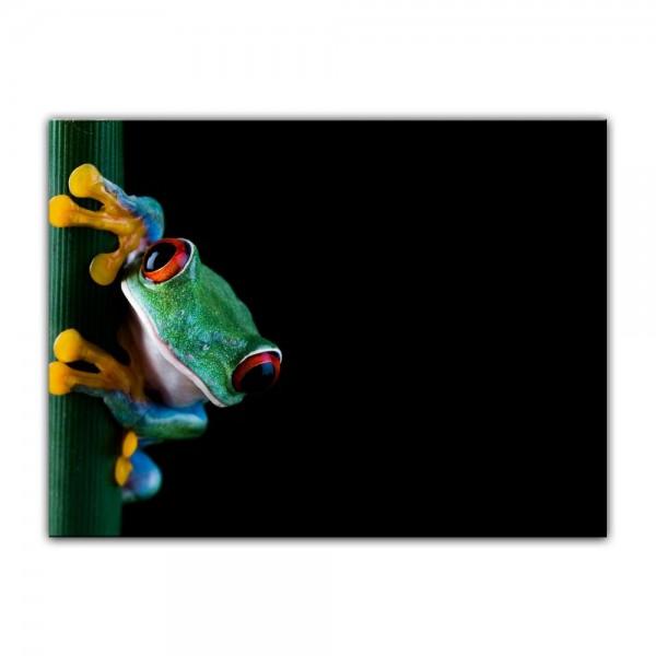 Leinwandbild - Laubfrosch