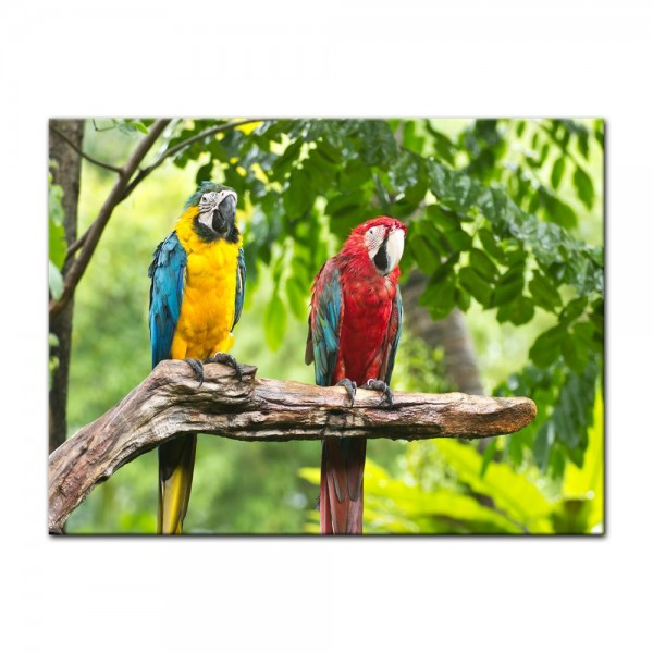Leinwandbild - Macaw Papageien
