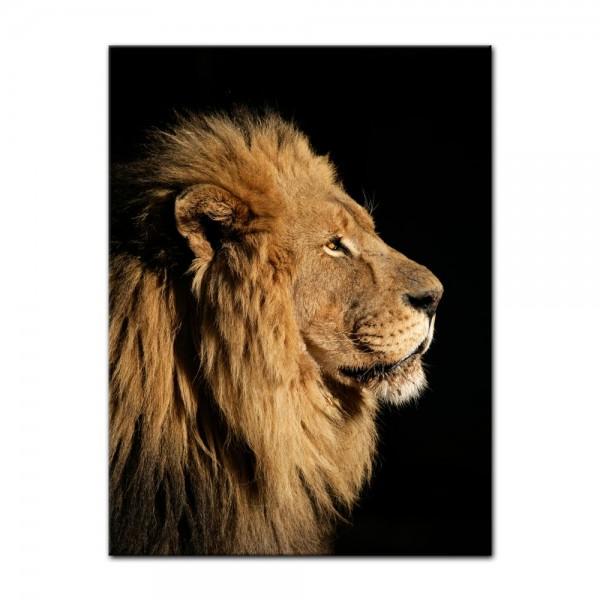 Leinwandbild - Großer Afrikanischer Löwe