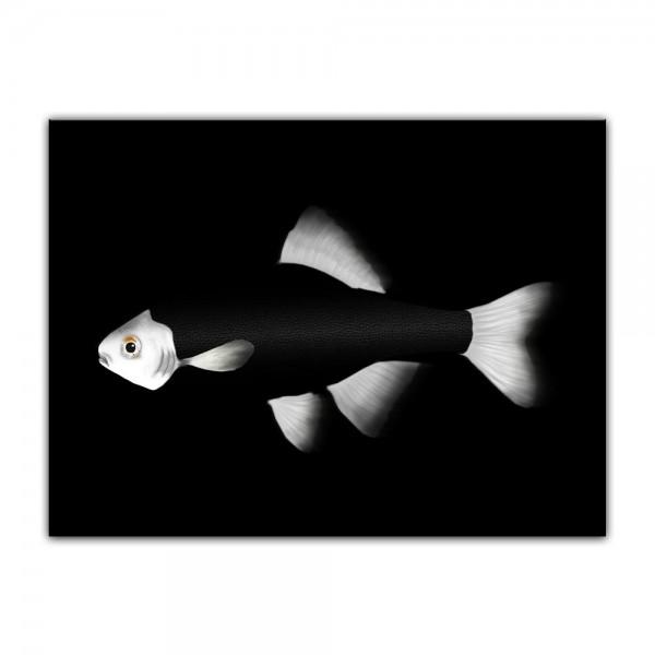 Leinwandbild - Fisch - schwarz weiß
