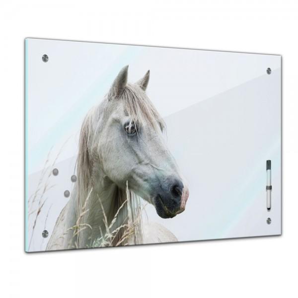 Memoboard - Tiere - weißes Pferd - Schimmel