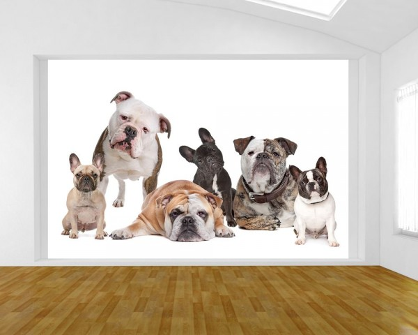 Fototapete - Bulldoggenfamilie