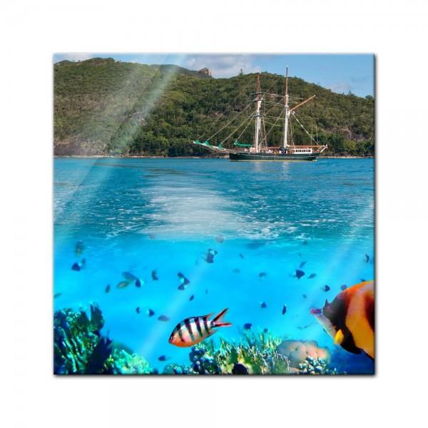 Glasbild - Marine Life in the Whitsundays - Australien