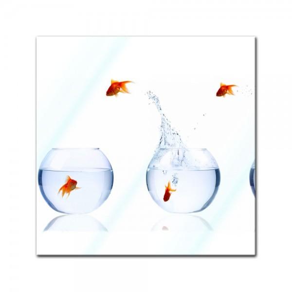 Glasbild - Fischolympiade