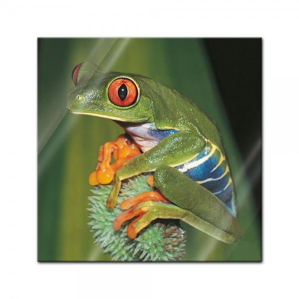 Glasbild - Frosch in der Natur