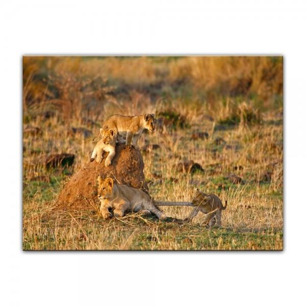 Leinwandbild - Löwenkinder
