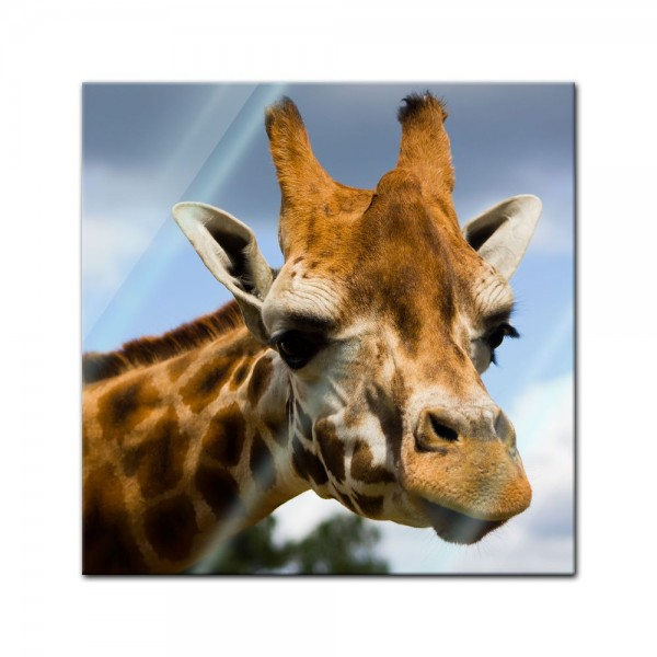 Glasbild - Giraffe