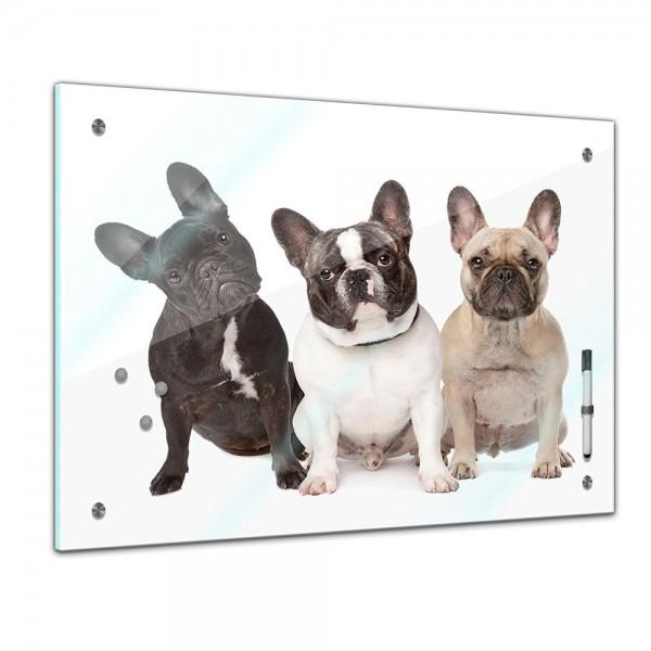 Memoboard - Tiere - Französiche Bulldoggen