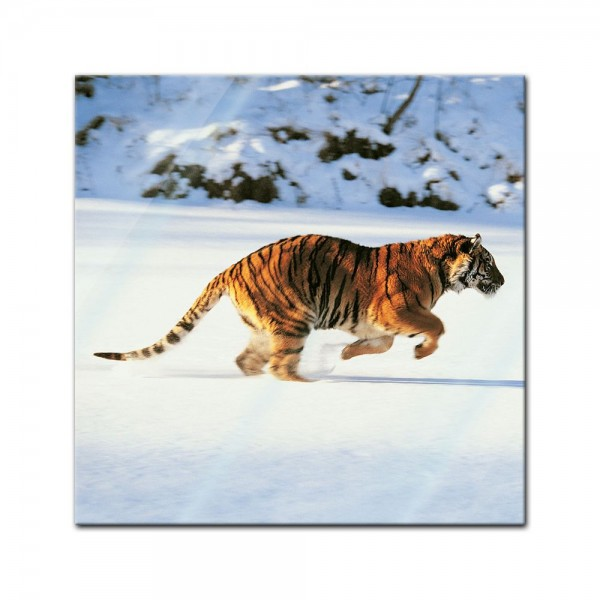 Glasbild - Tiger
