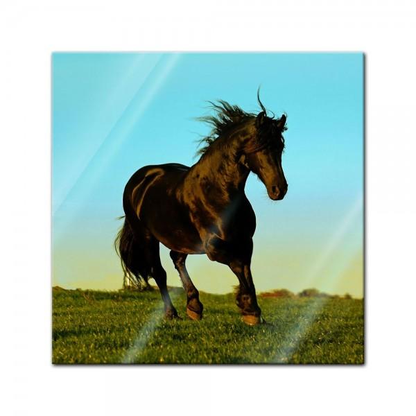 Glasbild - Pferd