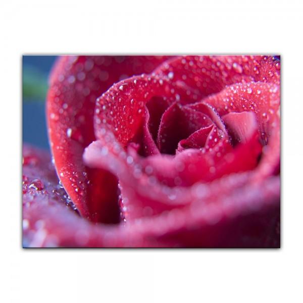 Leinwandbild - Rosenblüte