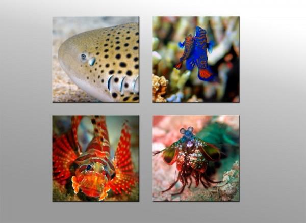 Leinwandbild Set 4 teilig Unterwasserwelt II